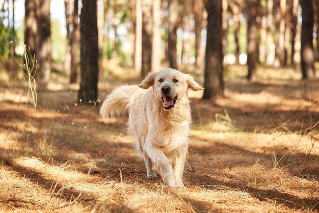 属狗人五行属木的性格命运